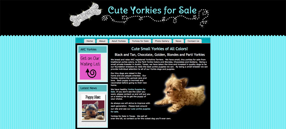 Cute Yorkies for Sale