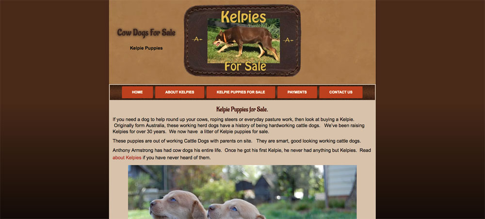 Kelpies and Cattle Dogs